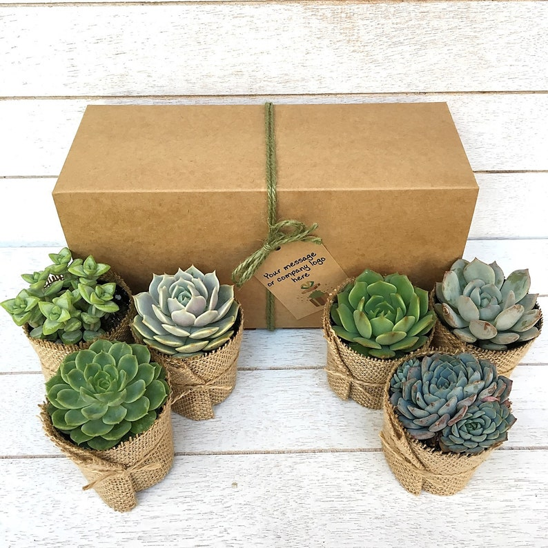 Client Gift Box-Gift Box with Logo-Company Gift-Succulent Gift image 0