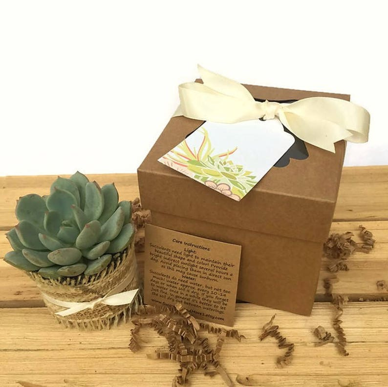 Set of 30 Succulent Gift Boxes-Rustic Succulent Favor-Thank image 0