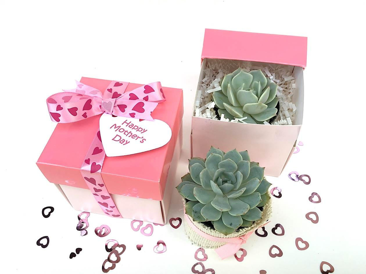 Birthday Gift Box-Succulent Gift for Her-Gift for Mom-Garden | Etsy
