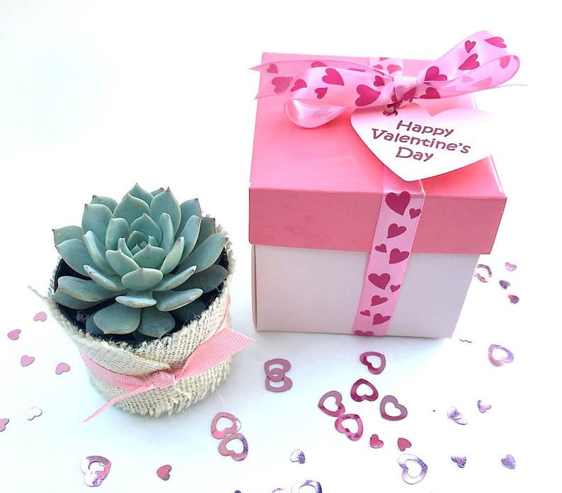 Pink Succulent Gift Box-Succulent Gift for Her-Pink image 0