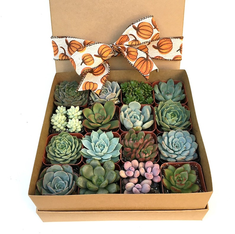 16 Succulent Plants in Kraft Gift Box with your choice of image 0
