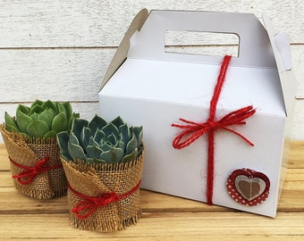 Anniversary Succulent Gift-Assorted Succulents-Garden in a Box-Wedding Gift-Plant Gift-Gift for Mom-Succulent Mom-Succulant Gift Box-Plant