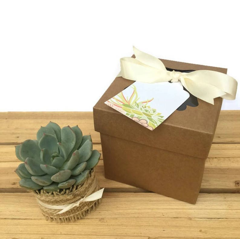 Set of 4 Individual Succulents in Gift Boxes-Succulent image 0