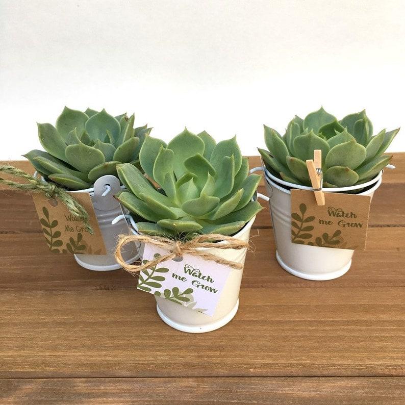 30 Succulent Favors-Succulents-Succulent Bridal Shower image 0