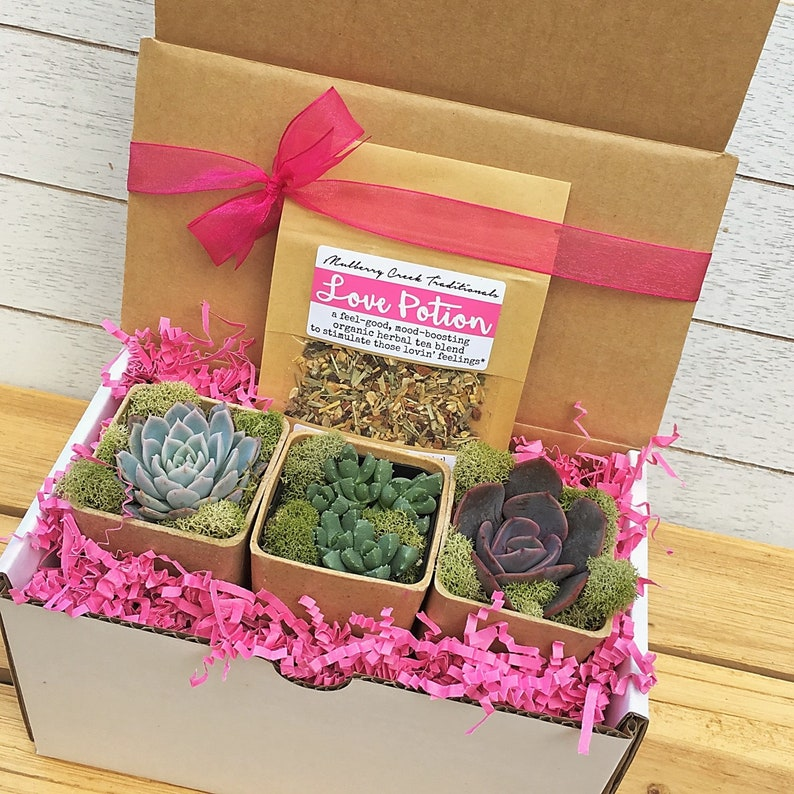 Succulents and Tea Gift Box-Gift for Her-Herbal Tea Gift Box image 0