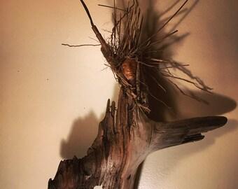 Appalachian Wood Sprite