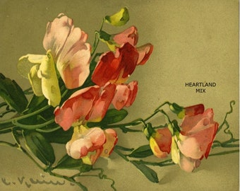 Floral Sweet Peas Digital Image Illustration Download Printable