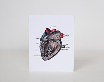 Anatomical Heart Love Card on White Cotton