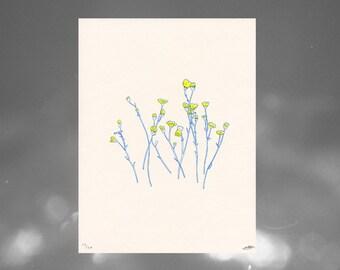 desert wild flowers // riso print
