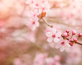 Dreamy Cherry Blossom Print {Floral Photography, Spring Photograph, Pink Artwork, Large Wall Art, Flower Canvas Picture, Pastel Home Decor}