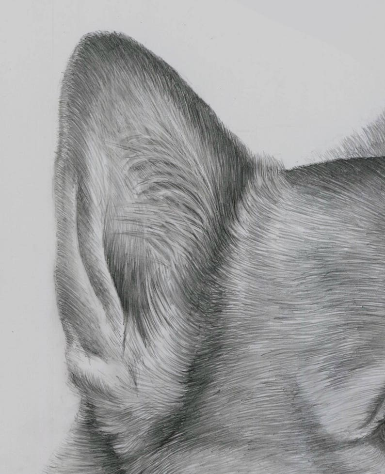 Corgi Drawing Hand Drawn Art from your Photos Custom Pet Portrait