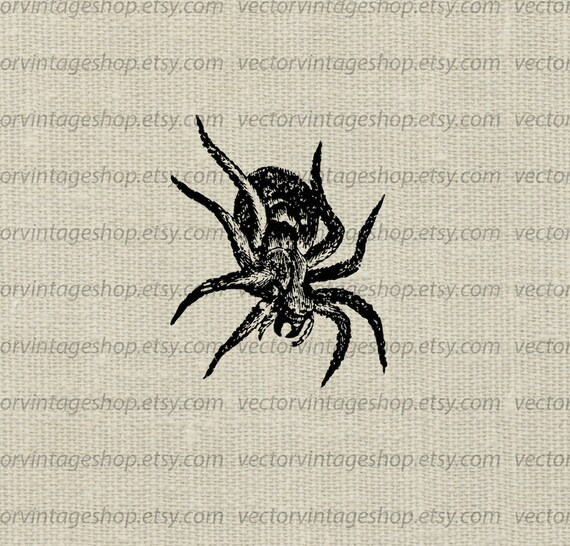 Spider Tarantula Vector Clipart Halloween Graphic Instant Download Commercial Use Poisonous Clip Art Old School Illustration Web1699ao