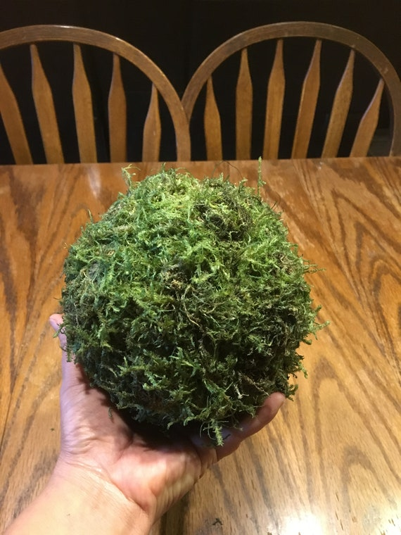 Moss Balls Set Of 5 6 Inch Moss Balls Farmhouse Decor Moss Ball Natural Moss Balls Set Of Moss Balls Bowl Filler Decorative Moss Balls