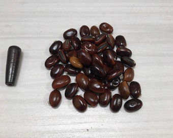 Pearl plant peas lanmer edge
