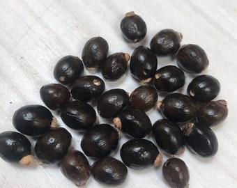 Black crab eye seeds