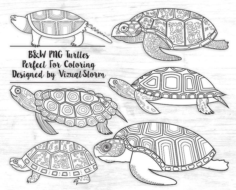2a2942df9d Hand Drawn Turtle Outlines Clipart Black and White Turtles for | Etsy