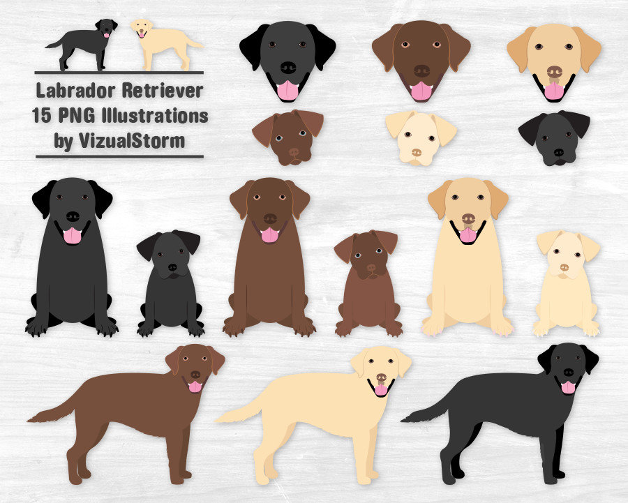 Labrador Retriever Clipart Black Lab Chocolate Lab Yellow ...