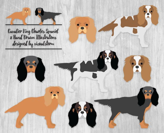 Cavalier King Charles Spaniel Clipart Toy Dog Illustration Etsy
