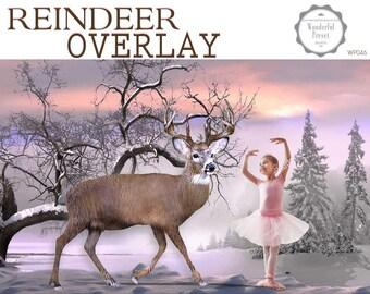 23 Reindeer Overlays - Digital files png, Digital Reindeers, Reindeers nose, Rudolf nose overlay, Christmas overlay,  WP046