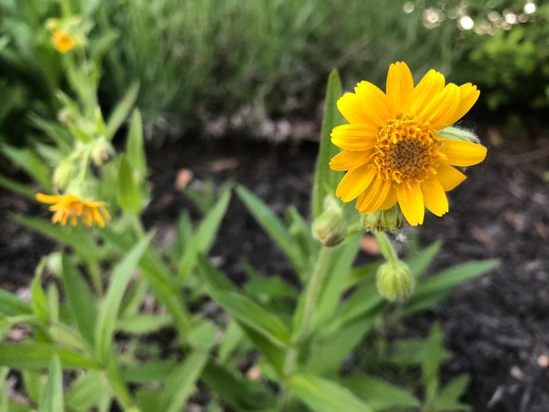 une plante Martin 1er avril trouvée par Jov' Il_794xN.1531929138_rmlw