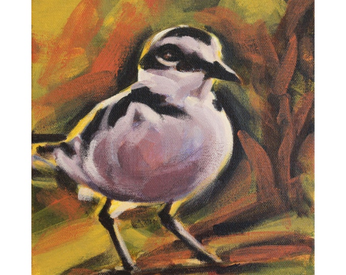 SNOWY PLOVER, Original Acrylic Painting on Canvas, Giclee Print on Paper, or Gallery Wrap Giclee Print on Canvas.