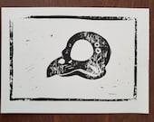 Small Bird Skull