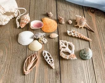 Seashells and Seashell Cross Sections