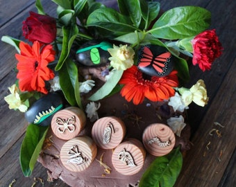 Butterfly Life Cycle Playdough Stamps
