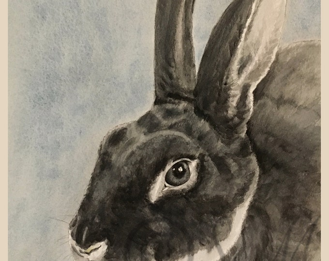 Gray Dutch Bunny