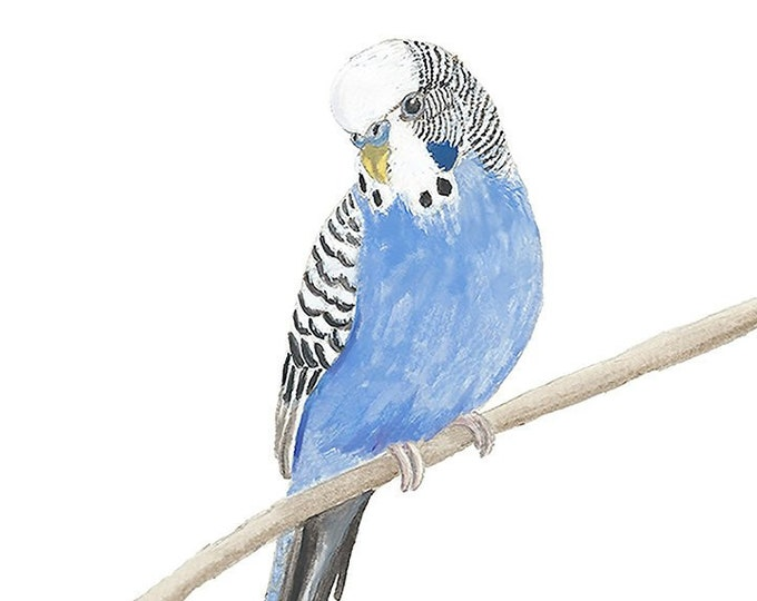 SPECIAL REQUEST Box of 6 Blue Budgie Cards