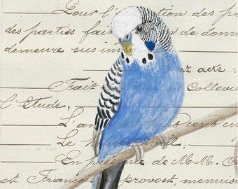 176 Blue Parakeet Card | Budgie | Friendship | Birthday Card