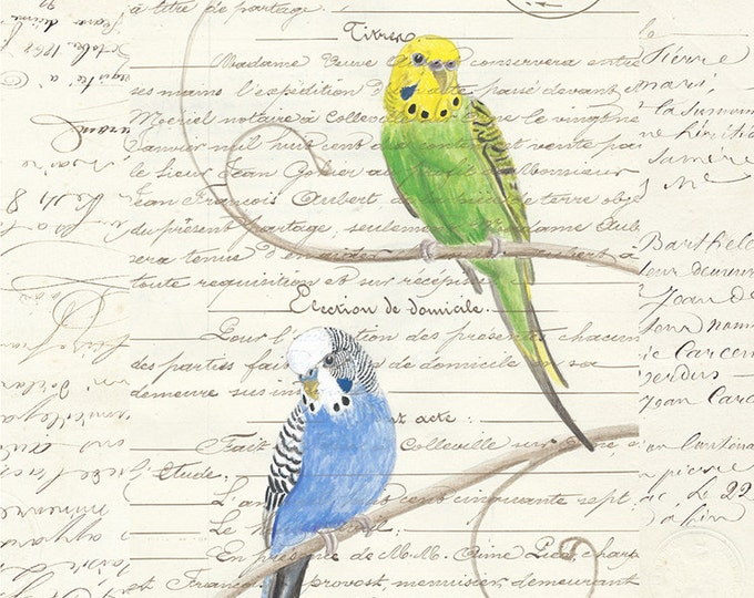 177 Pair of Parakeets Card | Blue | Yellow and Green | Budgie