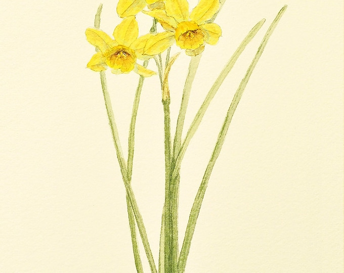 Narcissus Multi Flower Card