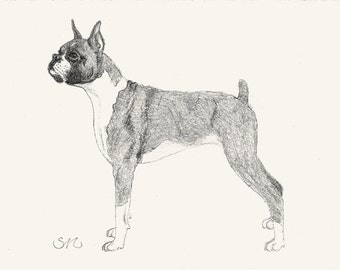 136 Boxer Drawing Card