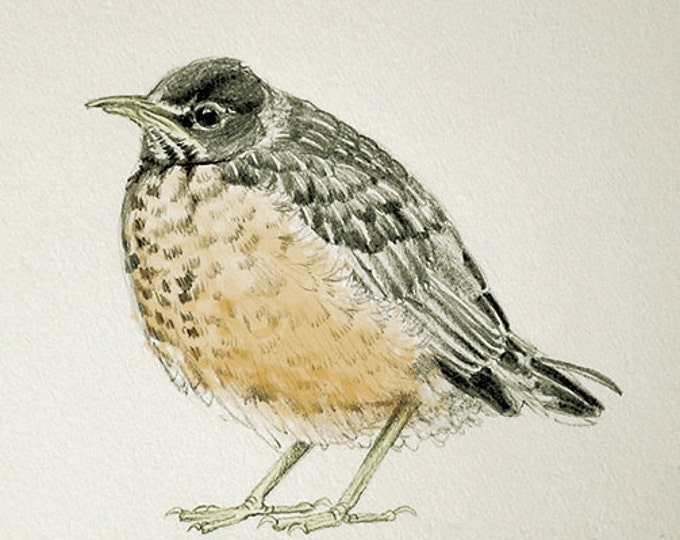 Baby Robin Sketch With Color Card