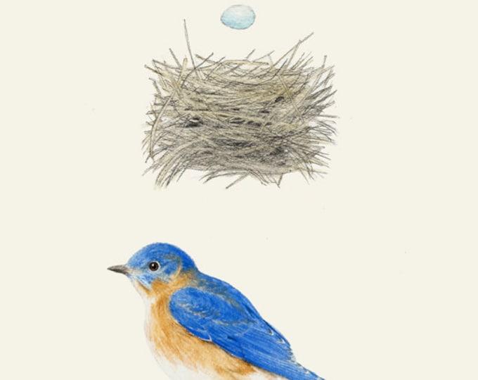 Bluebird Nest Egg Plain Card