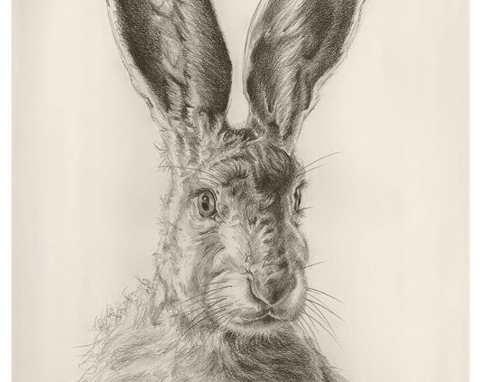 116 New Spring Hare