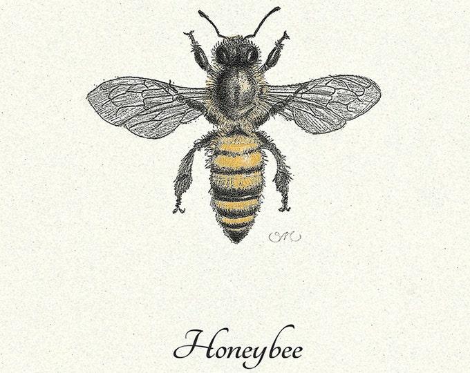 Honeybee Apis Mellifera Card
