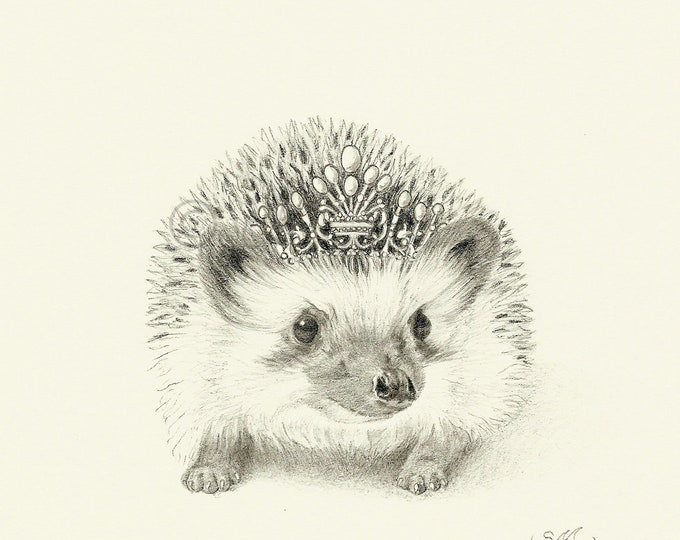 Crowned Hedgehog