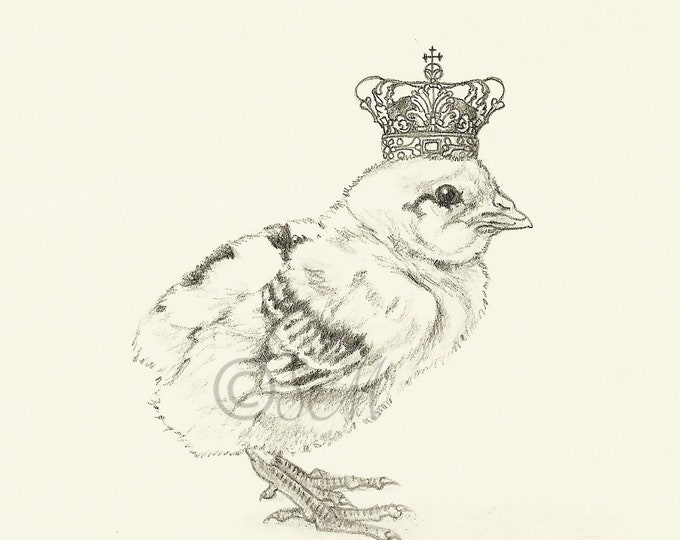 Crowned Chick