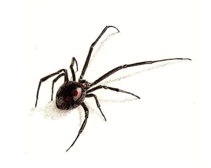 64 Black Widow Card
