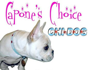 "Chi-Dog Chicago Flag Concho Collar - 8"" to 23"""