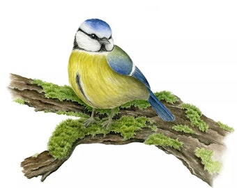 Realistic Blue tit Watercolor Painting