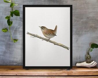 Watercolor Eurasian wren poster - animal bird nature print - hand made wall art painting