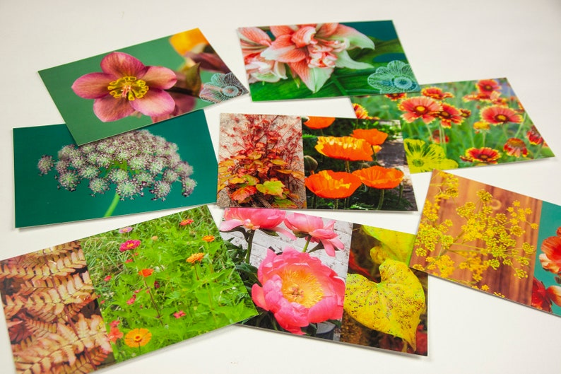Lot of 5 postcards 10x15 cm floral to choose from image 0