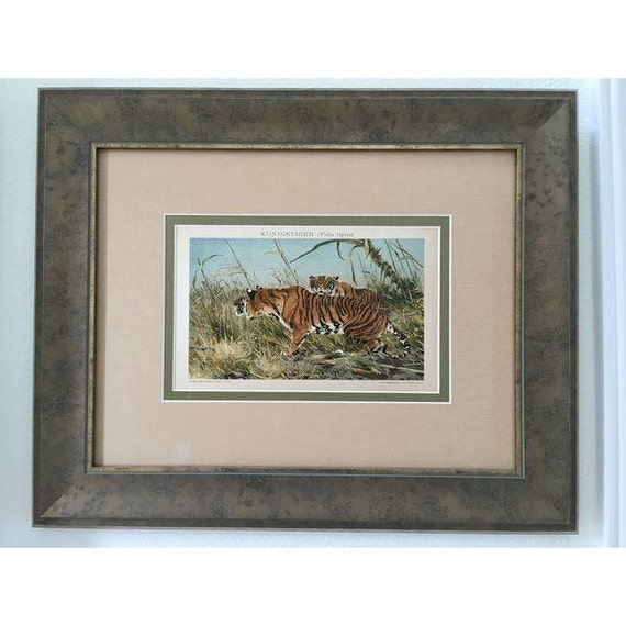 Framed Antique Tigers Lithograph, 1894
