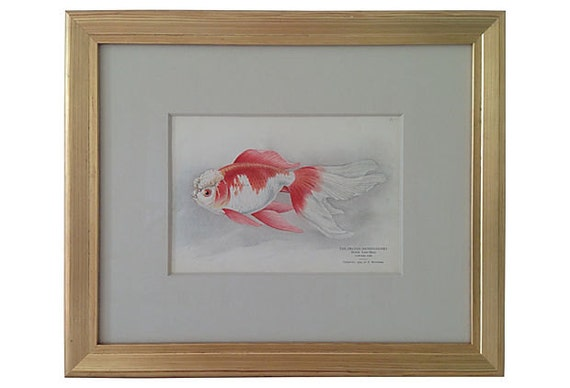 Framed Antique Fish Print, 1909