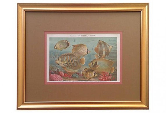 Framed Antique Fish & Coral Print, 1887