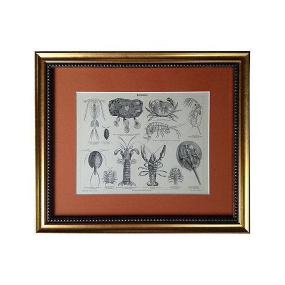 Framed Antique Engraving of Lobsters & Crabs