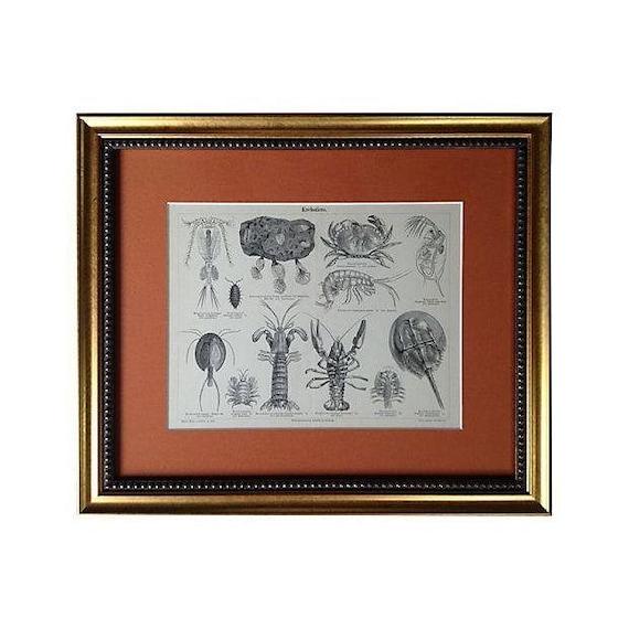 Framed Antique Engraving of Lobsters & Crabs